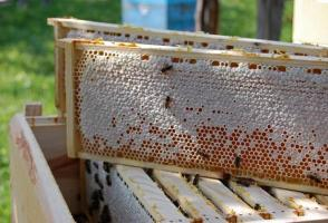 Мёд сотовый,1,0 кг.